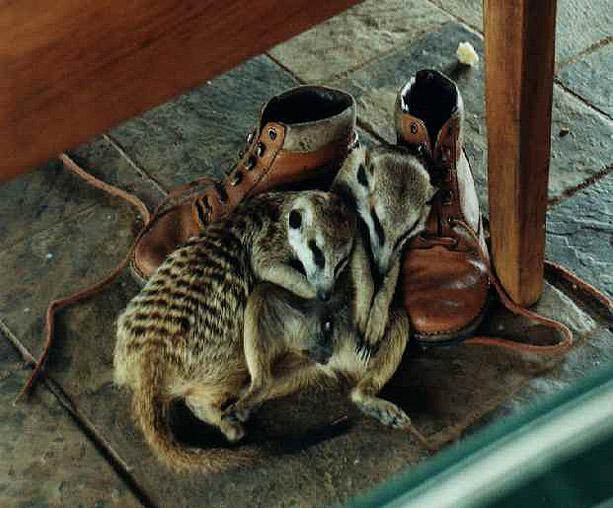 critters-and-shoes