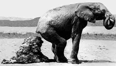 elephant-poo