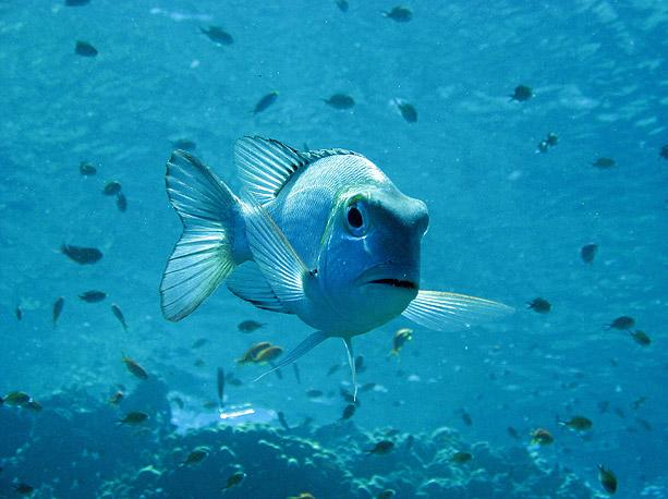 fish-in-egypt