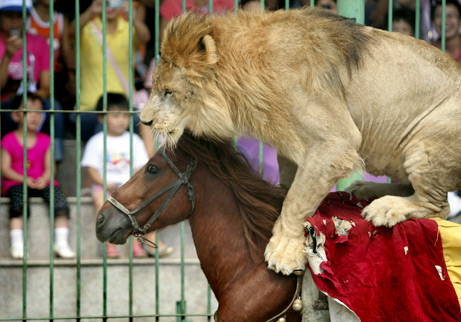 A lion rides a horse in China.  Courtesy of National Geographic.