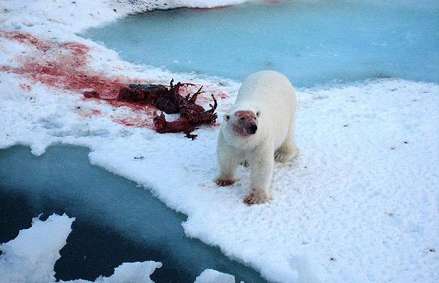polar-bear-and-seal