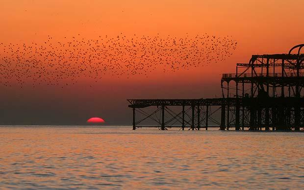 starlings-over-the-west-pier1