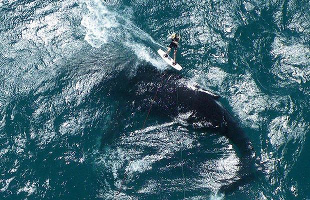 whale-surfer_1110915i