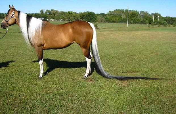 horse-tail_1124019i