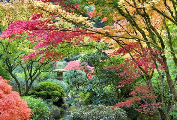 japanese garden in the fall